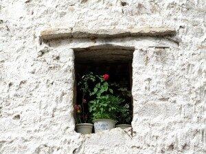 zdjęcie róży w oknie