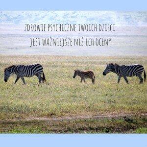 zdjęcie rodziny zebr
