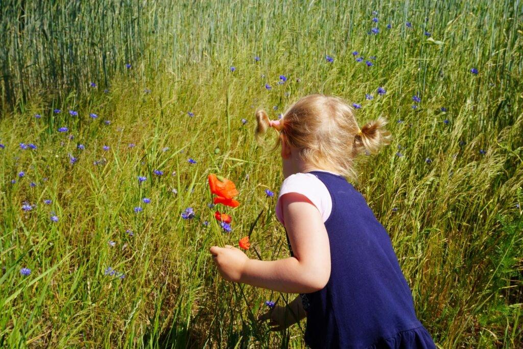 zdjęcie dziewczynka zbiera kwiaty wychowanie dziewczynek