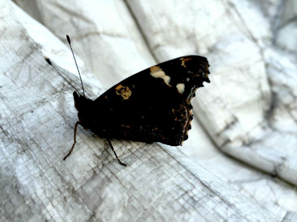 zdjęcie motyla 5 sposobów na samotność mamy