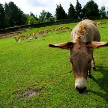 Mazury dla dzieci – park dzikich zwierząt