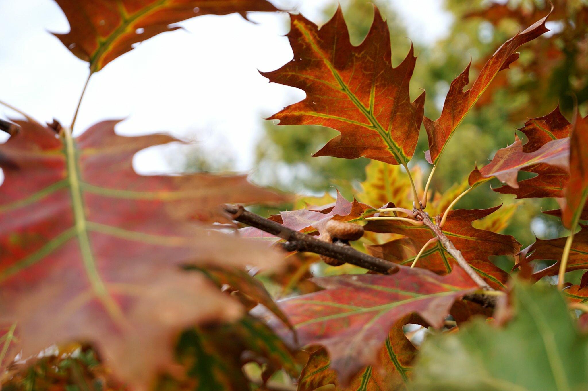 zdjęcie liści jesień stresujący dzień oczyszczenie głowy